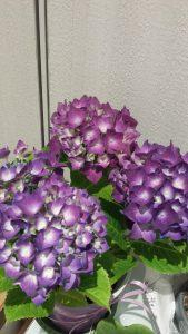 1周年祝いの花2