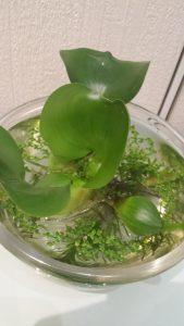 水苔の写真