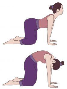 背骨の運動の仕方